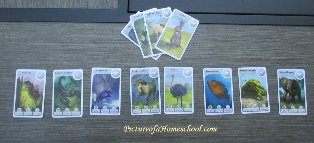CardLine animal classification game